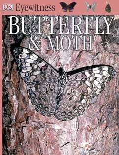 Cover for Butterfly and Moth