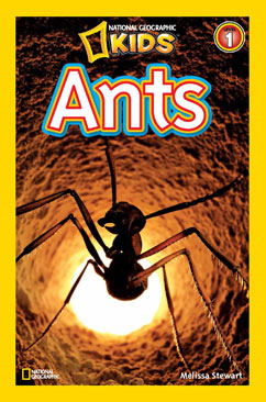 Cover for Ants