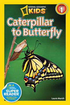 Cover for Caterpillar to Butterfly