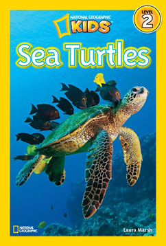 Cover for Sea Turtles