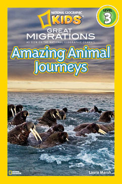 Cover for Amazing Animal Journeys