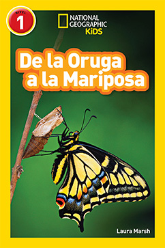 Cover for National Geographic Readers: De la Oruga a la Mariposa (Caterpillar to Butterfly)