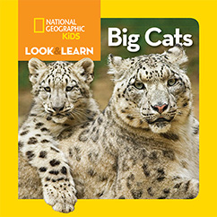 Cover for National Geographic Kids Look and Learn: Big Cats