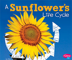Cover for A Sunflower's Life Cycle
