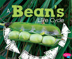 Cover for A Bean's Life Cycle