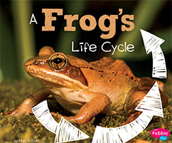 Cover for A Frog's Life Cycle