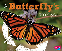 Cover for A Butterfly's Life Cycle