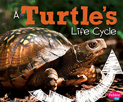 Cover for A Turtle's Life Cycle