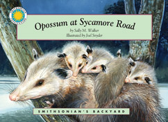 Cover for Opossum at Sycamore Road