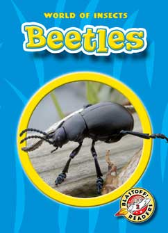 Cover for Beetles