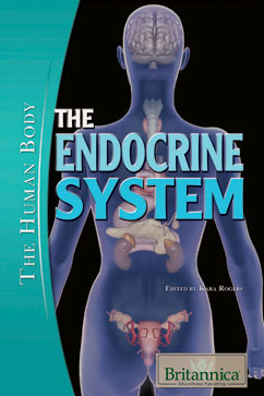 Cover for The Endocrine System