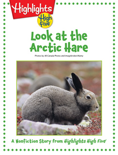 Cover for Look at the Arctic Hare