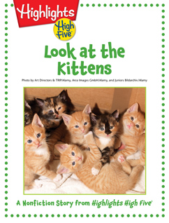 Cover for Look at the Kittens