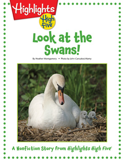 Cover for Look at the Swans!