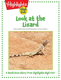 Cover for Look at the Lizard