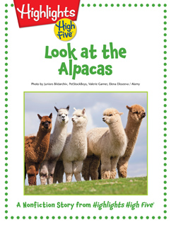 Cover for Look at the Alpacas