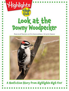 Cover for Look at the Downy Woodpecker