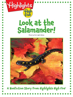 Cover for Look at the Salamander!