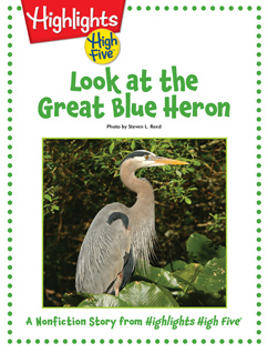 Cover for Look at the Great Blue Heron!