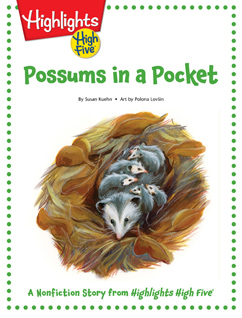Cover for Possums in a Pocket