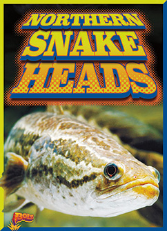 Cover for Northern Snakeheads