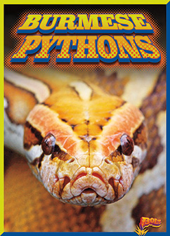 Cover for Burmese Pythons