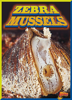 Cover for Zebra Mussels