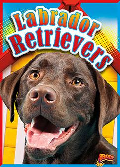 Cover for Labrador Retrievers