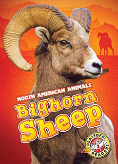 Cover for Bighorn Sheep