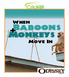 Cover for When Baboons and Monkeys Move In