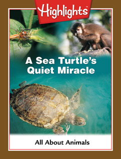 Cover for A Sea Turtle's Quiet Miracle